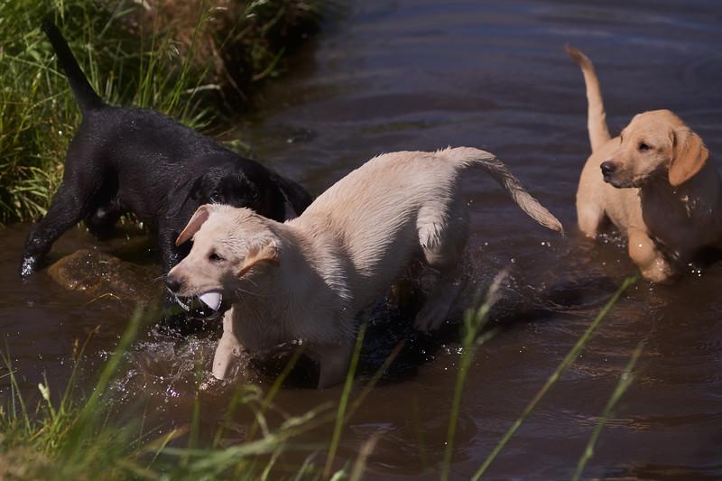 Puppies 805.jpg
