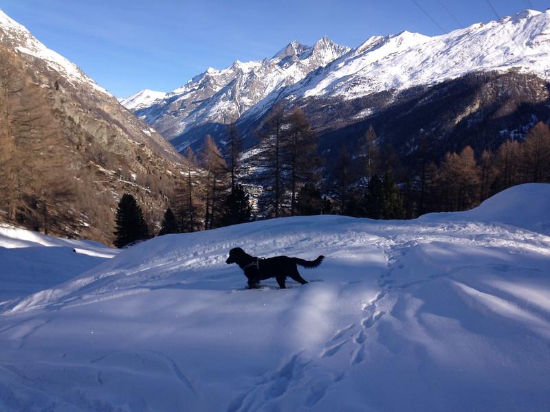 Othello Zermatt.jpg