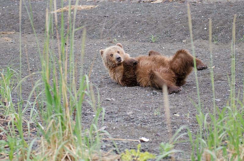 Alaska-8324.jpg