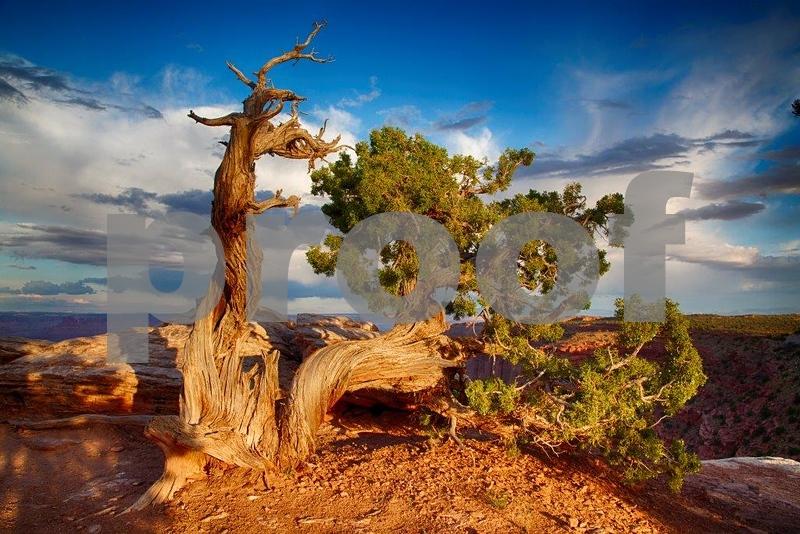 Canyonlands, Buck Canyon  6260_HDR.jpg