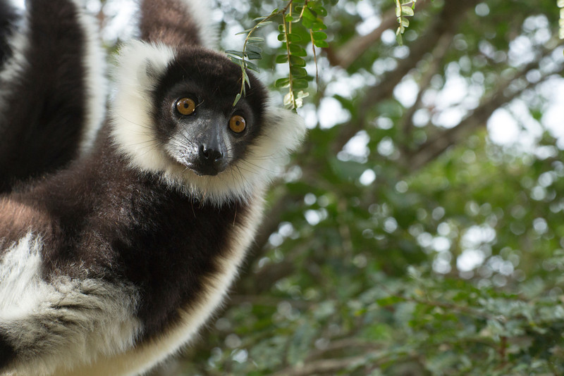 Madagascar_2013_IG3A2345.jpg
