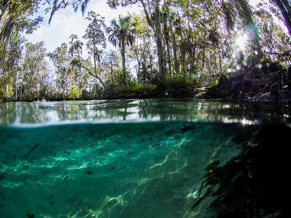 Crystal River Manatees and Three Sisters Spring