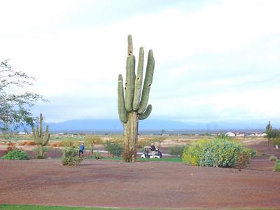 Arizona Trip - Feb 2009
