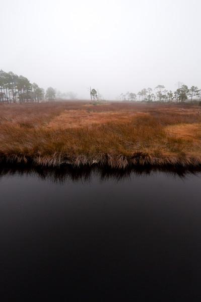 tritone swamp.jpg