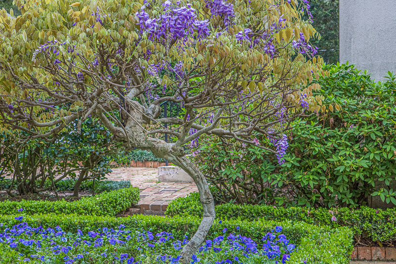 Bayou Bend/Rienzi Gardens