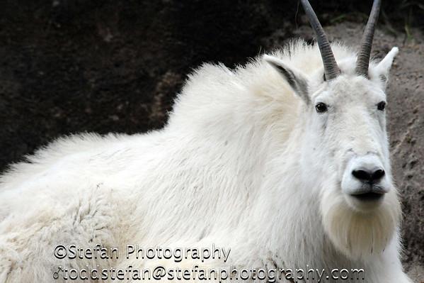 05-17-2014 Oregon Zoo