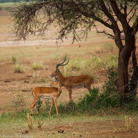 Tanzania Safari my picks