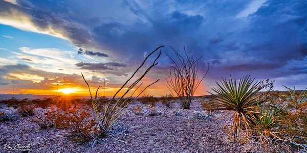 Although a bit difficult to spot, note that there is a rain column bathed in orange light directly behind the ocotillo in the middle background of the image.