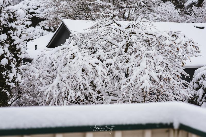 SnowWedgwoodFeb2019-8.jpg