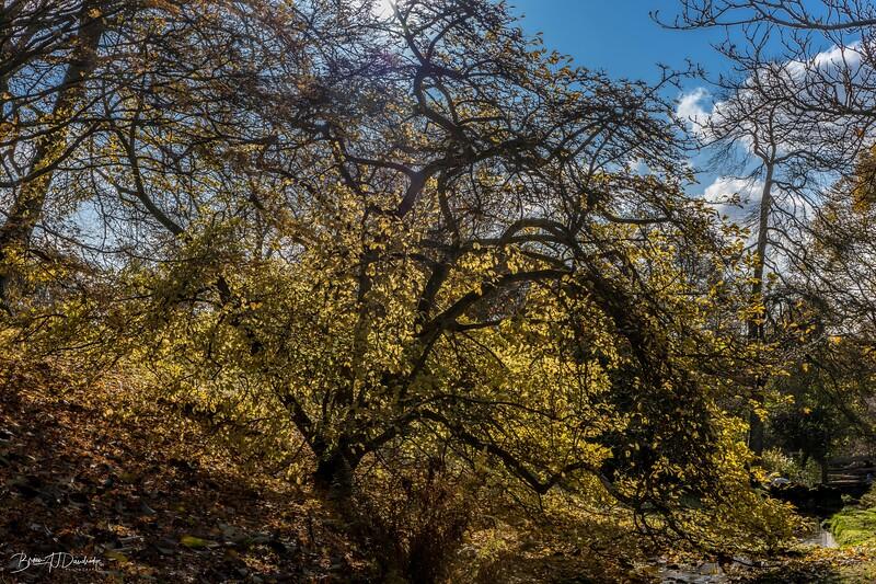 Wakehurst_Autumn-6088.jpg