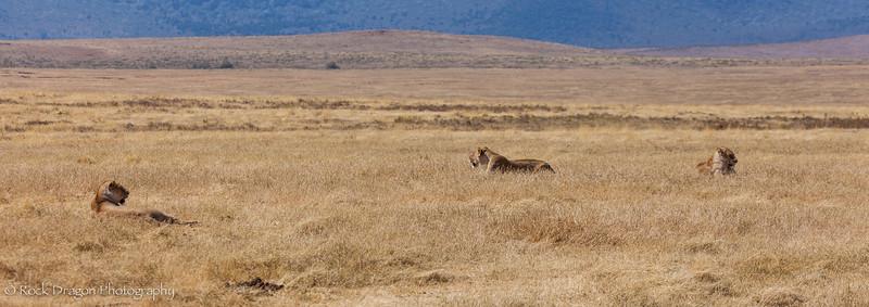 Ngorongoro-37.jpg