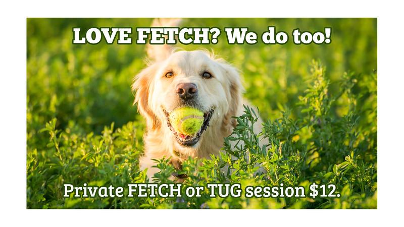 Fetch-Session.jpg