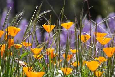 Flowers, Wildflowers, Nature