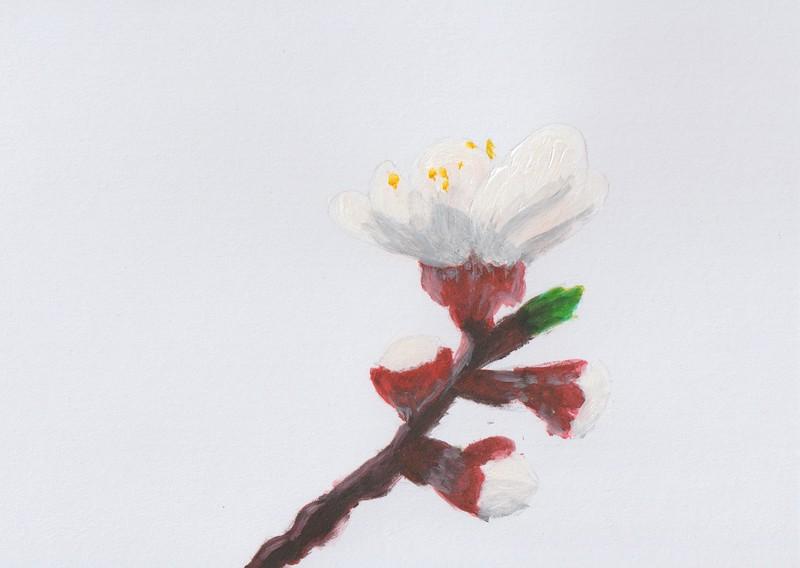 Apricot blossom I, 2020