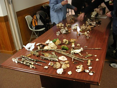 2003 10 Mushrooming