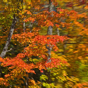 Upper Peninsula Michigan for fall colors. November 2012.