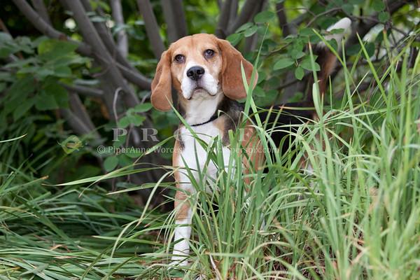 BeagleBit