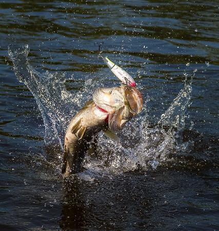 Fish and Angling