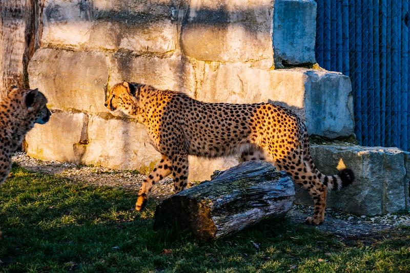 Tonis Zoo-0300.jpg