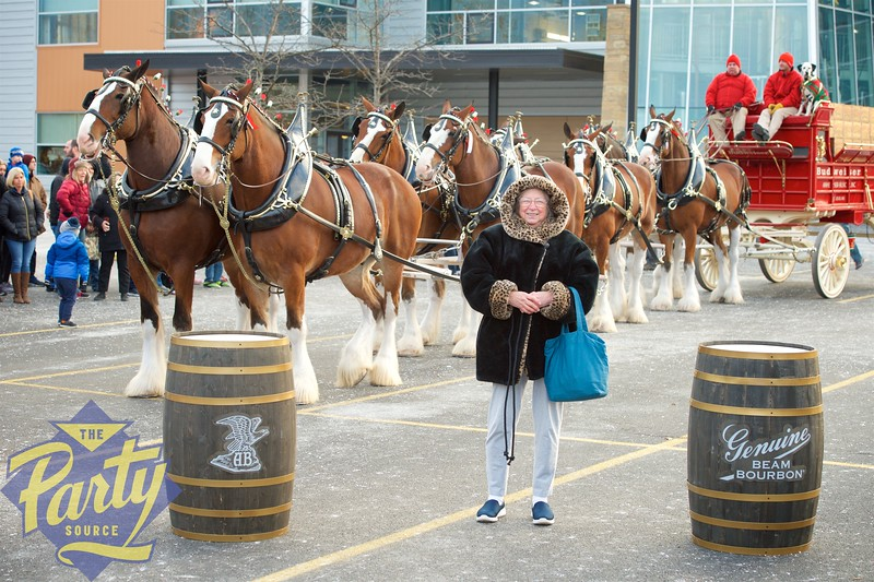 Clydesdale Portraits 164.jpg