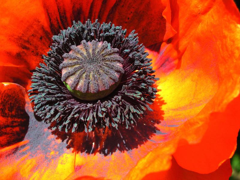 poppy 22  www.tabblo.com/studio/stories/view/247439/