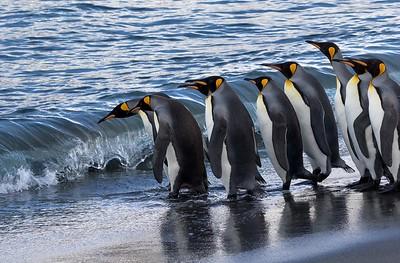 Falklands, South Georgia and Antarctic Peninsula, 2015