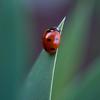 Lady on a Leaf