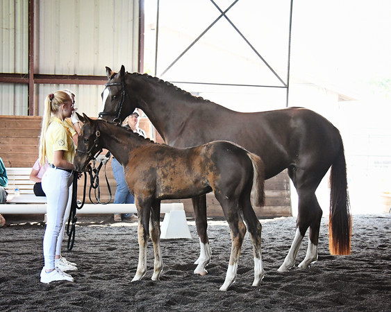 Royal Bliss FH & colt