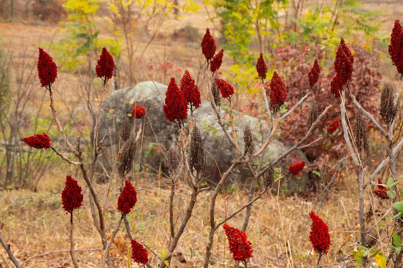 Redberries (1 of 1).jpg