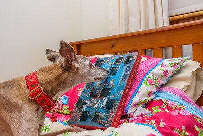 Penny with her advent calendar