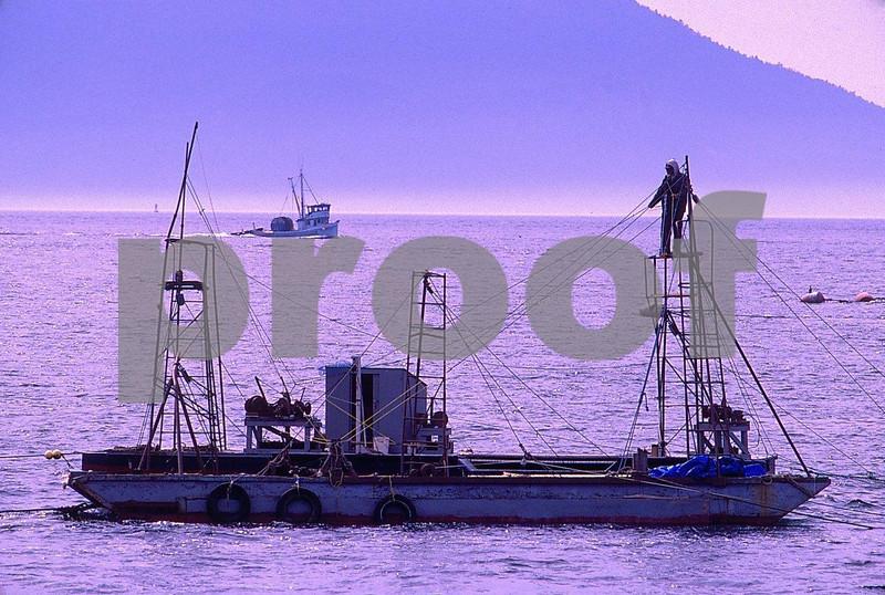 Sockeye salmon fishing near Lummi Island, WA state.
