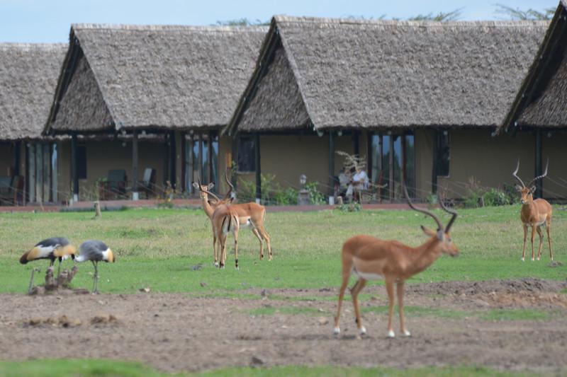 East Africa Safari 14.jpg