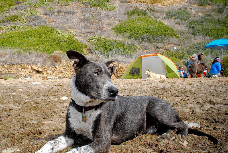 dogs_beach-079.jpg