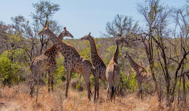 safari 2 (1 of 21).jpg
