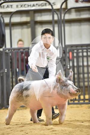 Swine Ring Shots