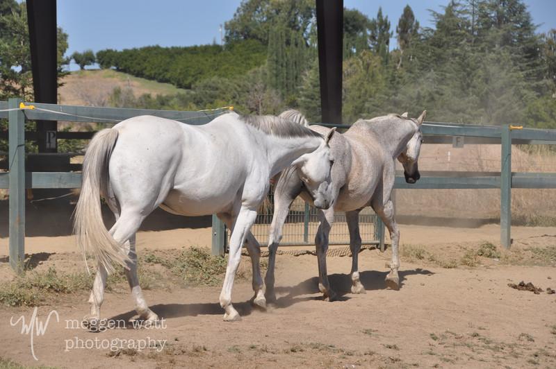 EB&Horses-097.jpg