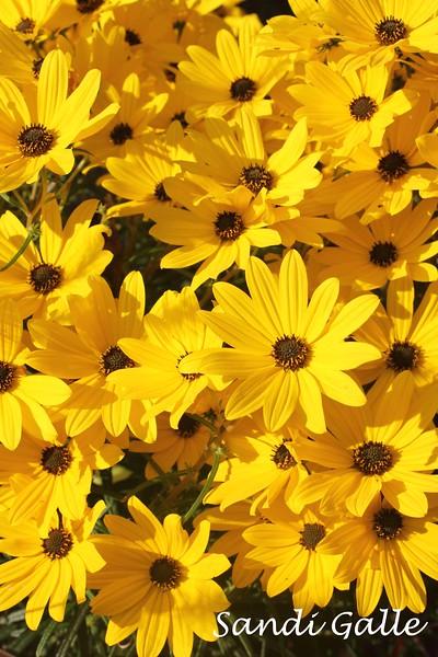 yellow flowera.jpg