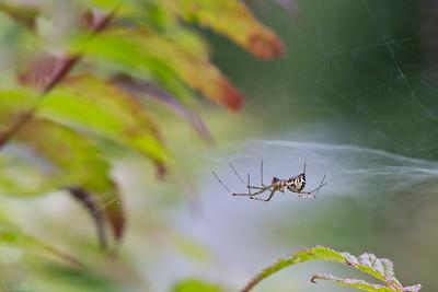 Insekter & spindlar