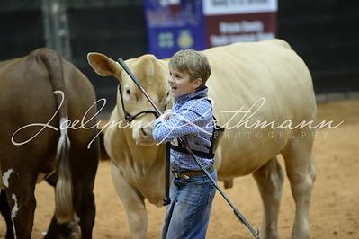 Market Steer Show
