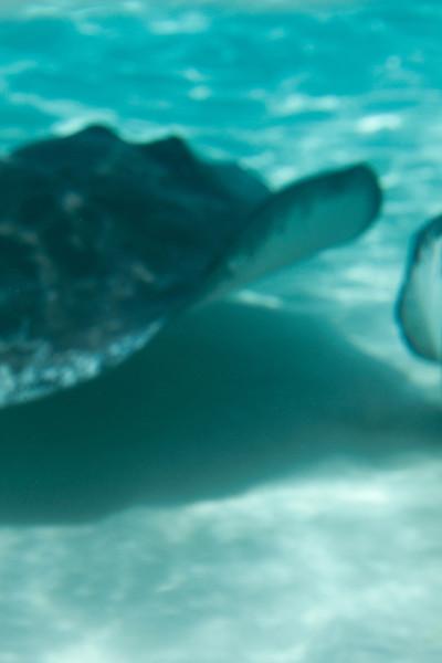 cayman--5.jpg