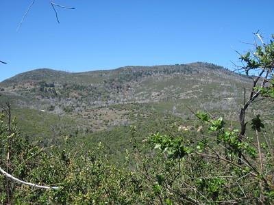 04-06-14 Japacha-Cuyamaca-Manza