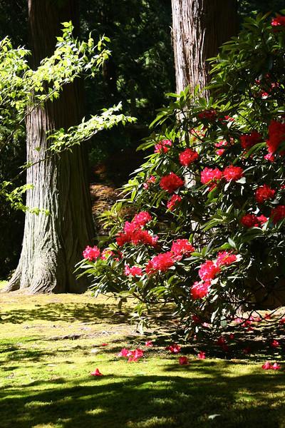 Portland Japanese Garden 6-3-11  1768.jpg