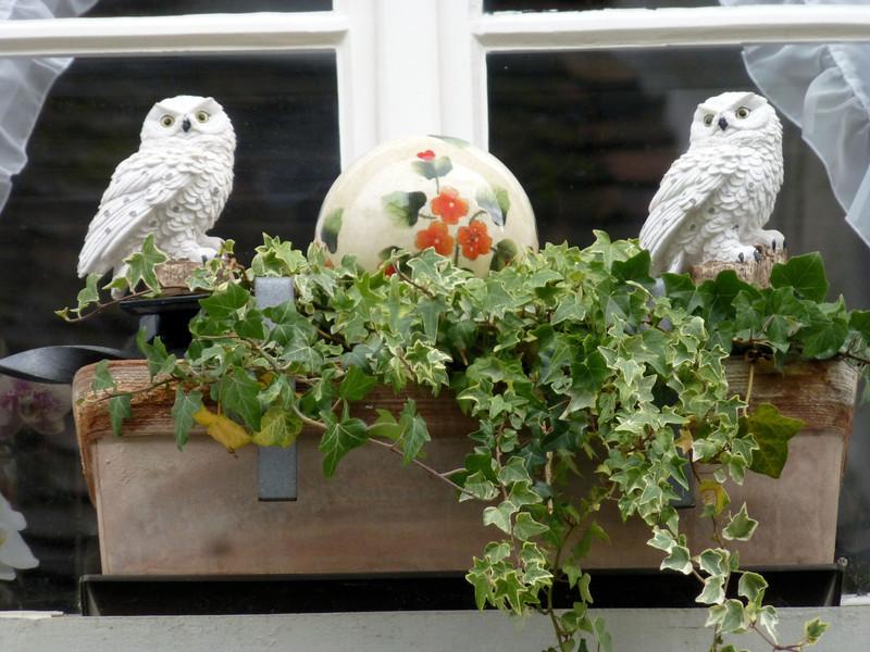 Day8-St Am Rhein window box w owls.jpg