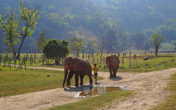 Elephant Nature Park Thailand (Audrey's)