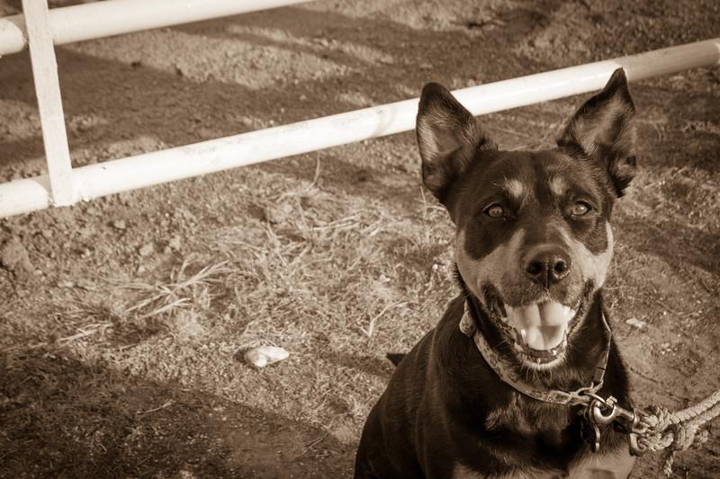 Stephanie Runion doggie-2.jpg