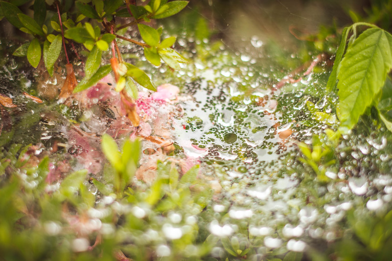 Spiderweb in the rain