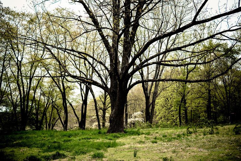 Brandywine Battlefield, PA