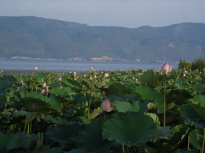 Fu Xian lake