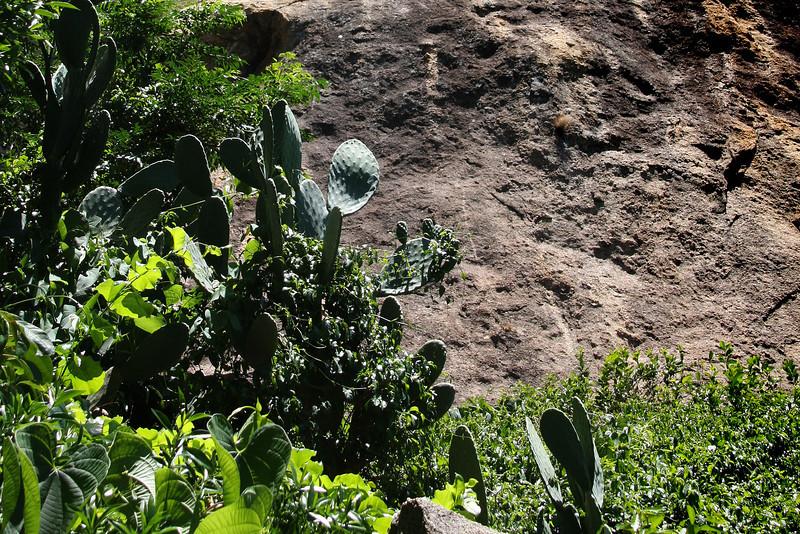 Madagascar, Fauna & Flora 14 Oda.jpg