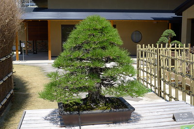 Ōmiya Bonsai Village 2011
